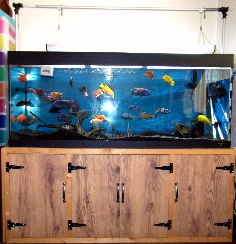 Freshwater aquarium no fish - Juwel 450 Litre Fish Tank Cabinet And Lights No Fish