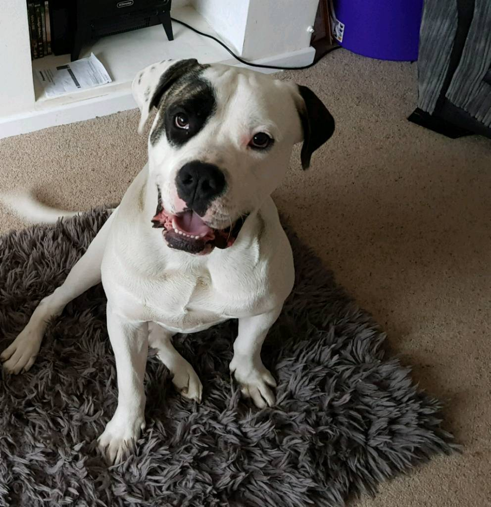 Young male dog needs a good home