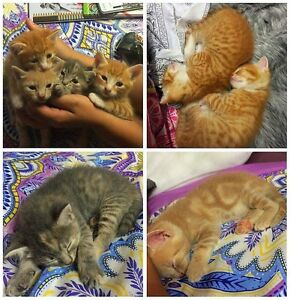 Kittens for sale Stockton Newcastle Area Preview