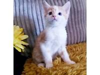 Male kitten 💙💚💙