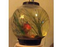 Bio orb fish tank plus stand