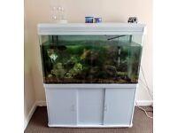 Fish tank 300l , equipment, cabinet, accessories, fish x 6