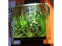 Fish Guppies For Sale Southsea (PO4)