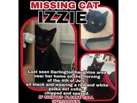 MISSING HOUSECAT IZZIE. HAUGHTON AREA DARLINGTON. DISAPPEARED 04/07/17