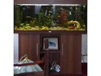 Juwel Rio 240 Aquarium Set-up