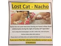 Missing ginger cat since 23rd April