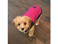 Canada Pooch Summit Stretch Vest Dog Coat, size 12, Plum