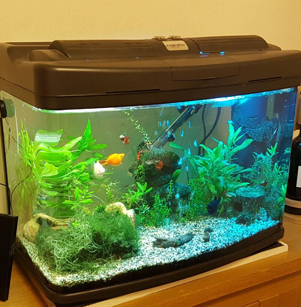 64l fish box bow front fish tank aquarium cabinet for Bow fish tank
