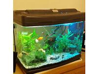 "64L ""Fish Box"" bow front fish tank/aquarium + cabinet/stand"