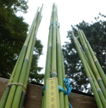Bambus Stangen Bambusrohr Tomaten Gurken Rankhilfe Deko Basteln