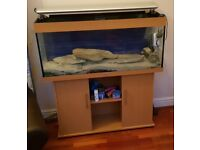 Large Jewel Fish Tank with all equipment