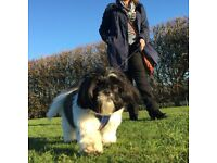 Cat Sitter - Dog Walker for Small or Toy Breeds - House Cleaner - Available - Woodbridge