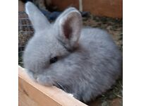 Two Baby rabbits for sale