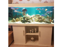 Full Set Up Fish Tank Juwel Rio 400 with All Accessories WITH Live stock (Fish)!