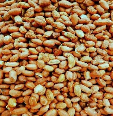 Fresh Premium Quality Wild Bird Food Peanuts Nuts Garden Feeder 25kg