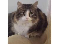 Missing Cat, M14