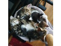 Cute and cuddly tabby kittens