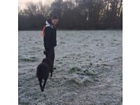 'Take the Lead' Dog Walking & Pet sitting service. Fully Insured.🐶❤