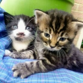 5 Gorgeous, Playful Kittens for Sale
