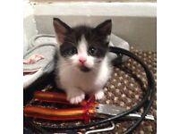 5 gorgeous kittens READ DISCRIPTION