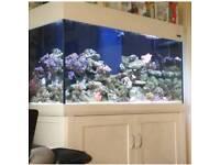 Aqua one aqua reef 400 with so many extras
