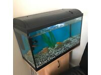 2.5ft fish tank for sale with cabinet