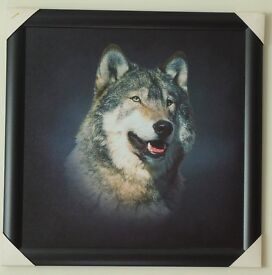 FRAMED WOLF PICTURE. STUNNING. IDEAL PRESENT.