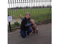 Dog Behaviorist and Trainer
