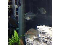 neon glass fish