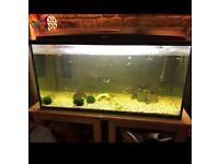 200L tropical fish tank including fish