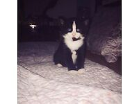 4 Kittens for sale*******