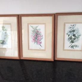 Pictures in pine frames by Dorothy lockley .