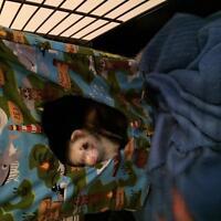 hamacs pour petits animaux (furet, rat, lapin, herisson,etc)