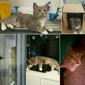 Cat missing please help