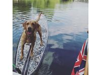 House Keeper required to manage our stunning houseboat and look after our gorgeous dog Max