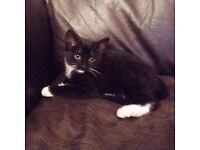 Kitten 12 weeks