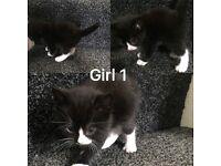 10 fluffy tabby bengal kitten insurance free