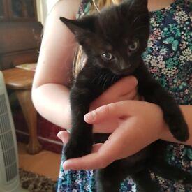 Black and black/white kittens
