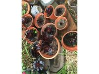 Plants. From £5