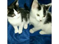 2 male kittens available