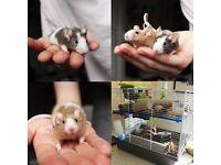 2 male mice + cage! - URGENT