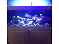 4ft marine aquarium