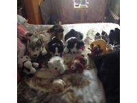 Bag full of Cuddly Toys ,,Paddington Bear,,Andrex Puppy,,Large Black and white Collie,plus More