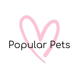 Popular Pets Limited - Brighton and Hove's Lovely Dog Walking Service
