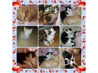 Loving Playful kittens for sale