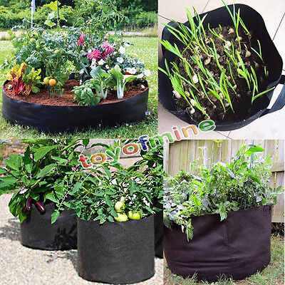 5 pack fabric grow pots aeration plant bags 1 2 3 5 7 10 What are miniature plants grown in pots called