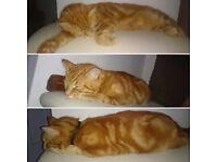 Missing Cat (£100 reward) *Fetch*