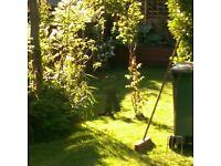 Garden clean