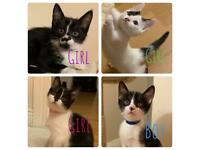 Kittens looking forever home NOW