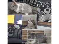 Unique bunnies 🐰🐰